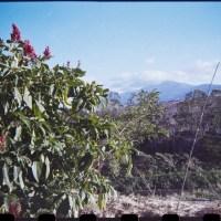 Costa Rica 145©JamesECockroft 20150228