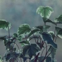 Houseplants 1©JamesECockroft 20150228