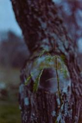 Nikon FG & 50mm 1.8E