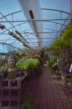 in the greenhouse with the LC-A