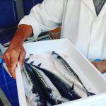 Our fresh mackerel