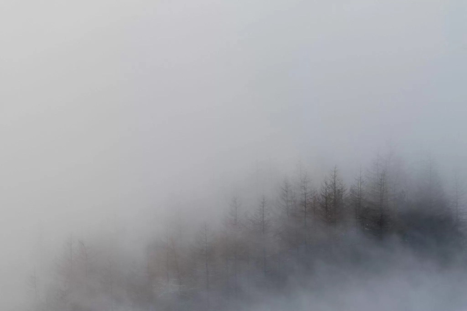 Mam Tor Misty Trees -  Mam Tor Peak District Photography Workshop