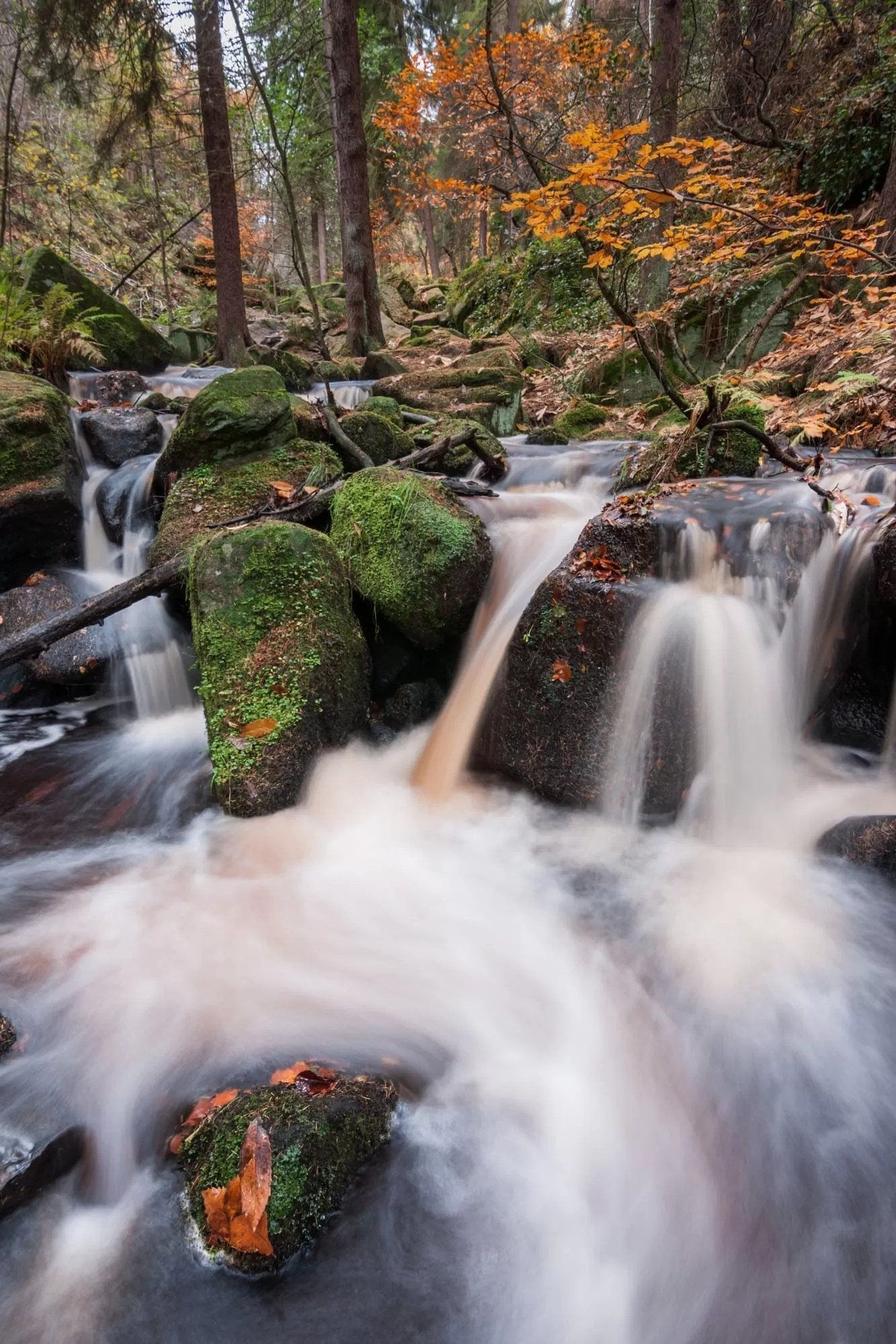 Wyming Brook Autumn - Peak District