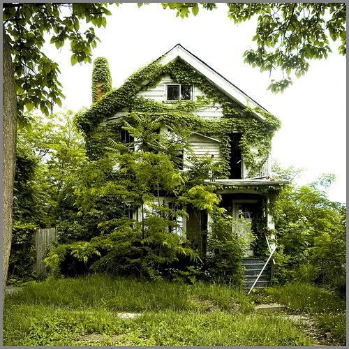 Feral Houses- James Griffioen