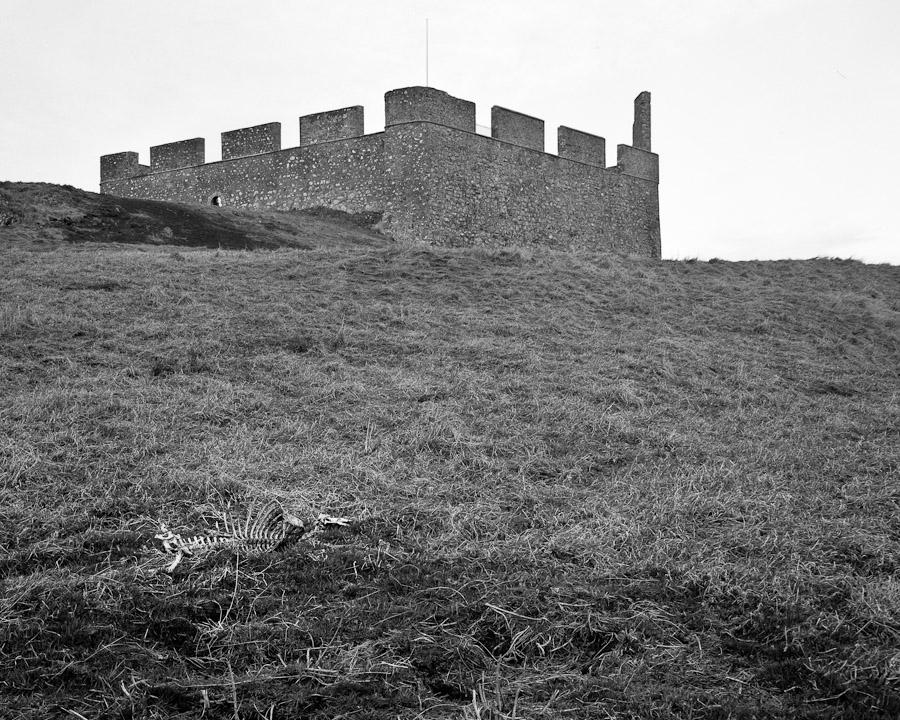 Castle vs Sheep