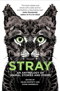 Stray-cover3-320x480