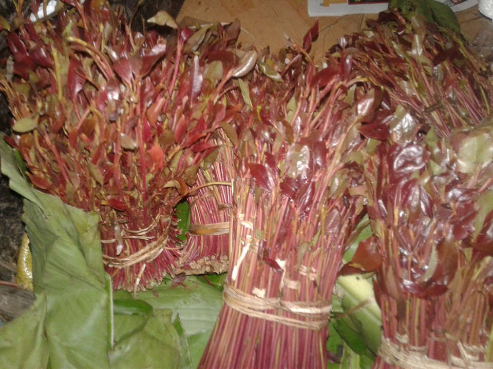 UK jails man found in possession of miraa from Kenya