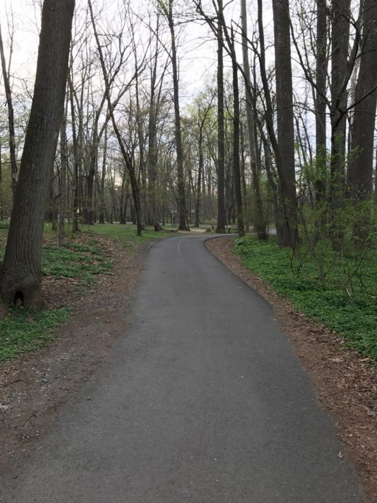 Bike Path in Arlington