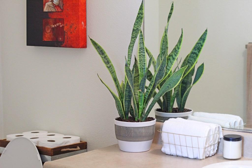 3 Simple Bathroom Decor Ideas