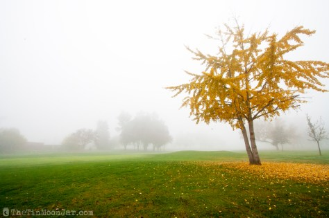 Fog and a brilliant yellow tree