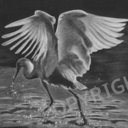 """""""No Egrets"""" - Black and White Charcoal Drawing by Colorado Artist Jamie Wilke - Water Bird"""