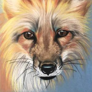 Red Fox Charcoal and Pastel Drawing by Colorado Artist Jamie Wilke
