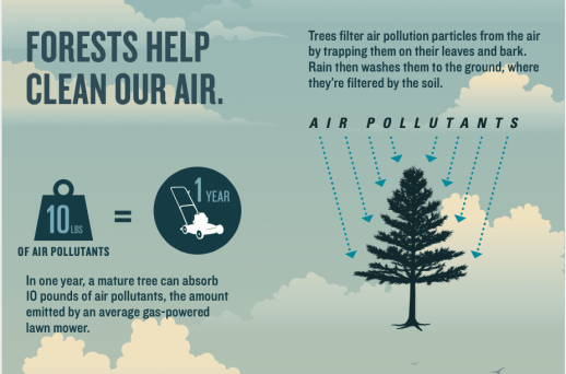 Forests Help Clean Our Air