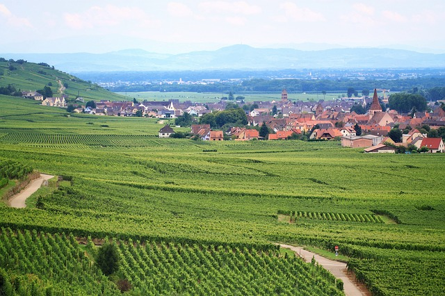 vineyard-762891_640