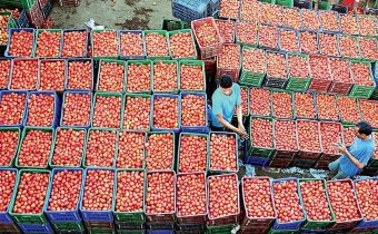 Millions of rupees earned by selling tomato seeds