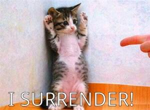 Cat-I-Surrender