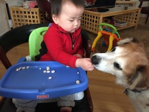 Zi feeding Jackson
