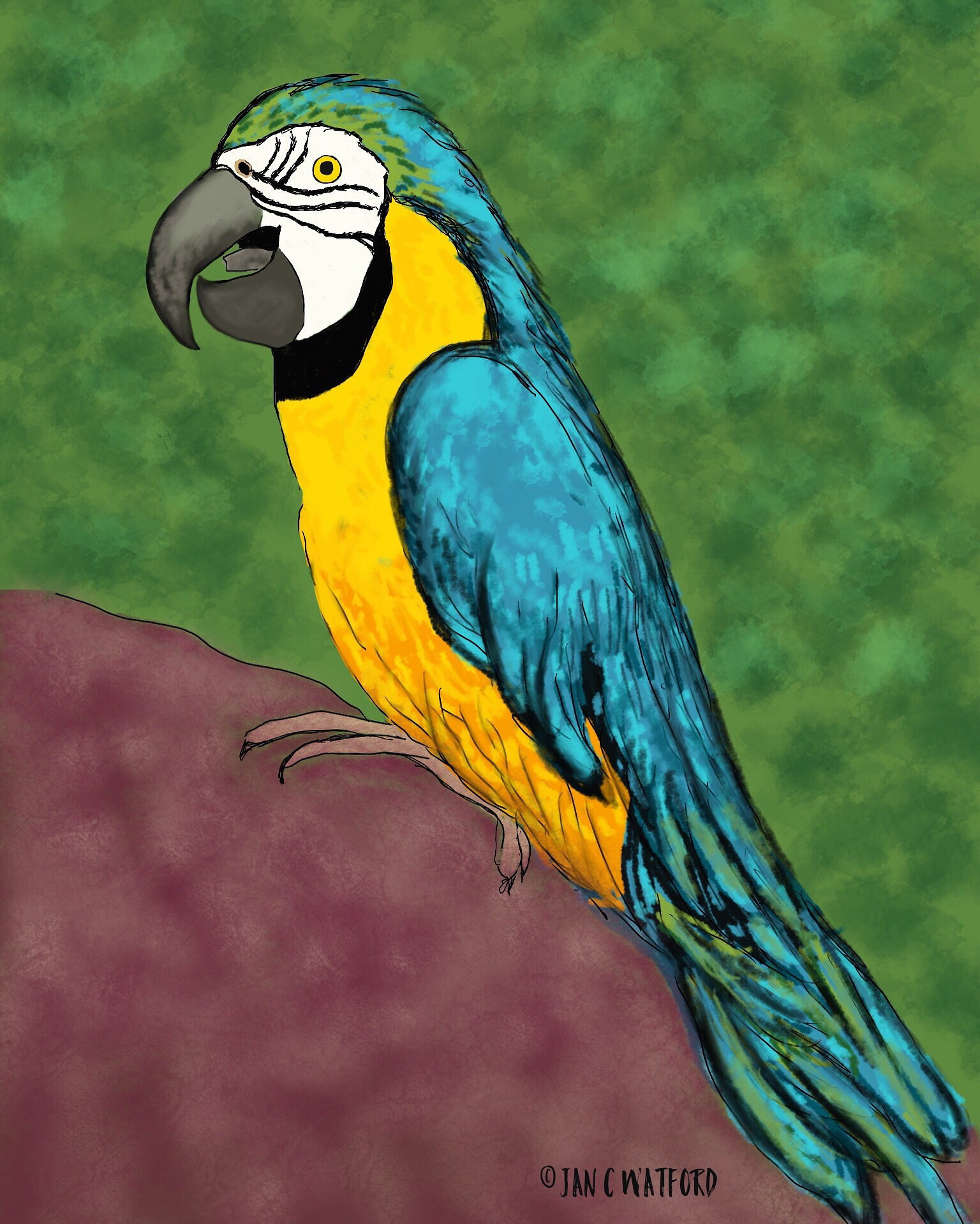 Parrot-Prompt-Realism-#52Week-Illustration-Challenge