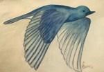 bird-n-fight-illustration