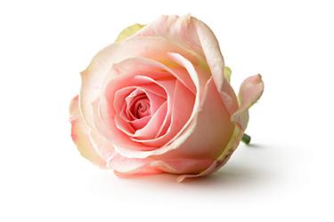 Janda Florist Order Flowers Plants Gifts Online Since 1976