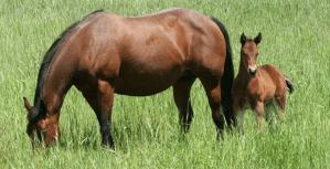 horse q&a sufficient forage-https://www.jandnfeedandseed.com