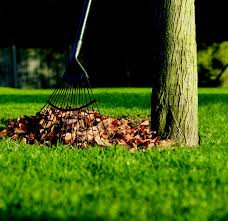 leaves rake