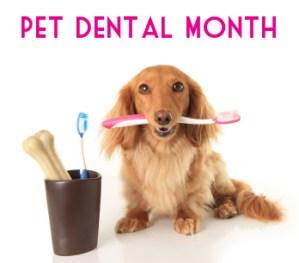dental care tips for your pet-https://www.jandnfeedandseed.com
