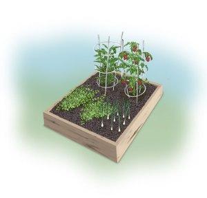 Garden Ideas: Chilles and Rellenos Garden-https://www.jandnfeedandseed.com