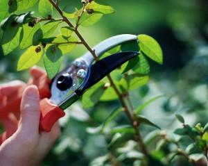 how to prune-https://www.jandnfeedandseed.com