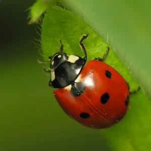 gardening beneficial bugs-https://www.jandnfeedandseed.com