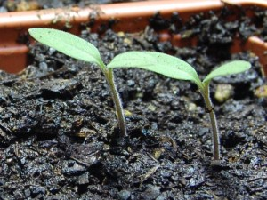 starting fall seeds- https://www.jandnfeedandseed.com