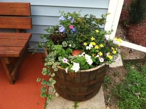 ollas clay pot irrigation