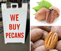 We buy pecans at J&N Feed and seed in Graham, Texas.