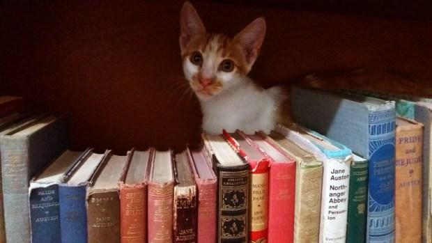 Chocolate na Biblioteca Jane Austen