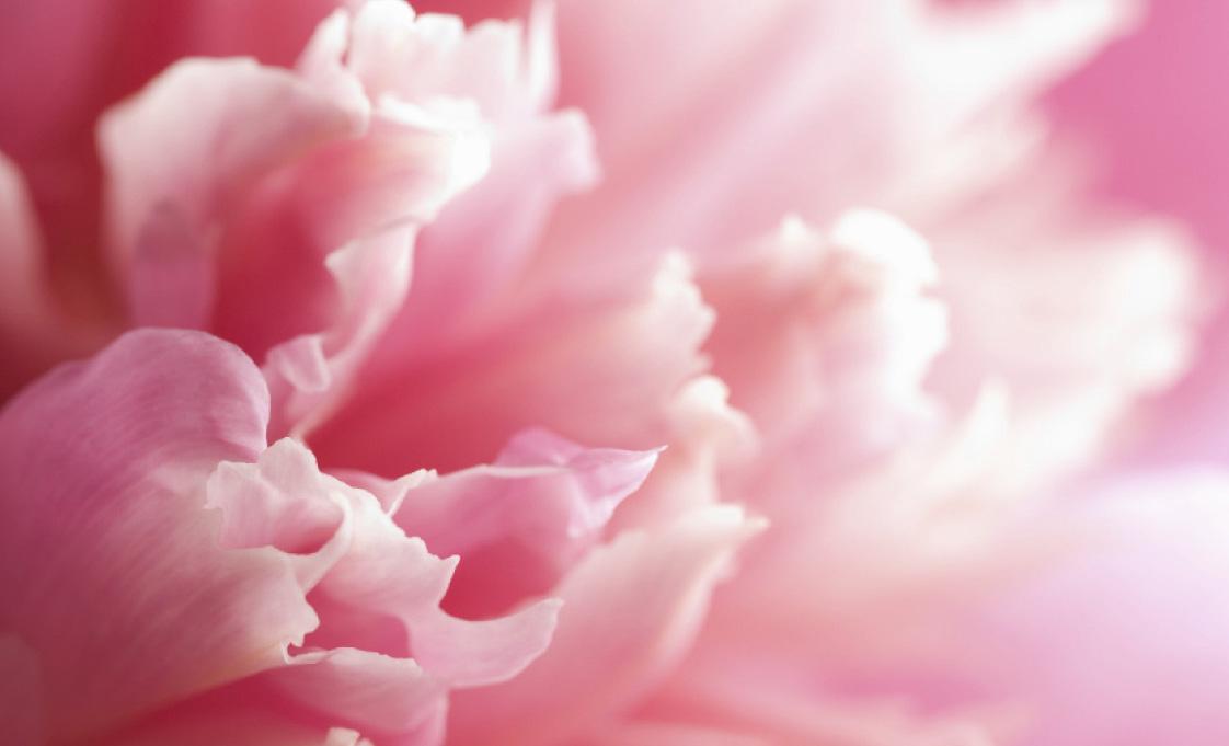 Image result for flower essence