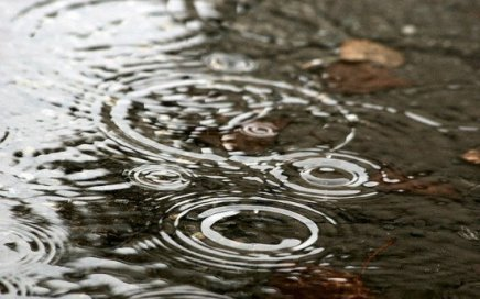 Several water drops hitting a pond surface, resulting in circular ripples