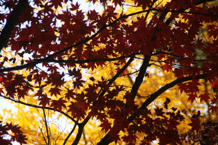 autumn leaves 2