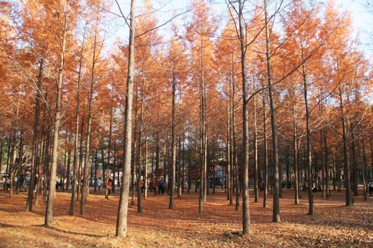 nami island autumn 2