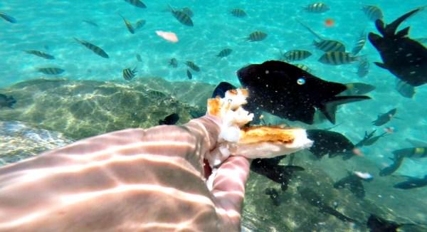 paradise-island-park-&-beach-resort-davao-47