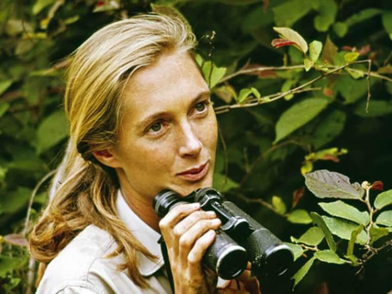 Jane Goodall, 1965, Gombe.