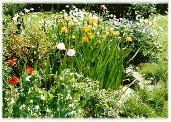 pond with iris