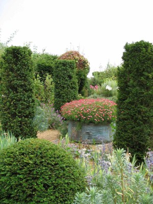 topiary and container