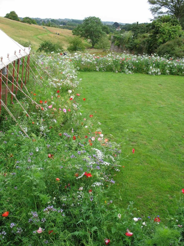 Lawn belted with wildflowers