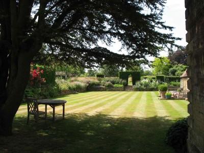Lawn and cedar