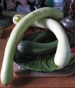 Squash Tromba d'Albenga