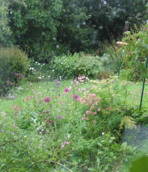 The herb garden in full flower