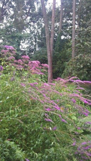 wild garden pink plants and trees