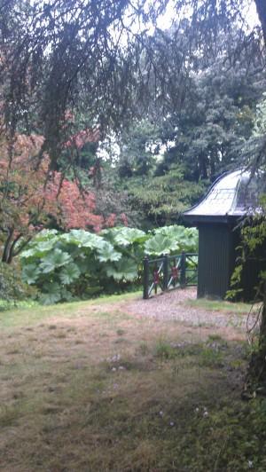 hut in wild garden