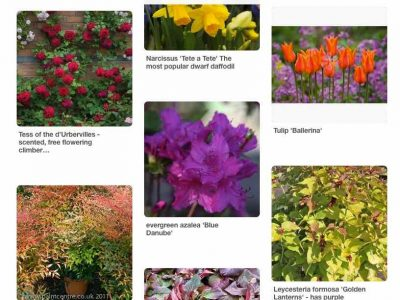Pinterest board with plant photos