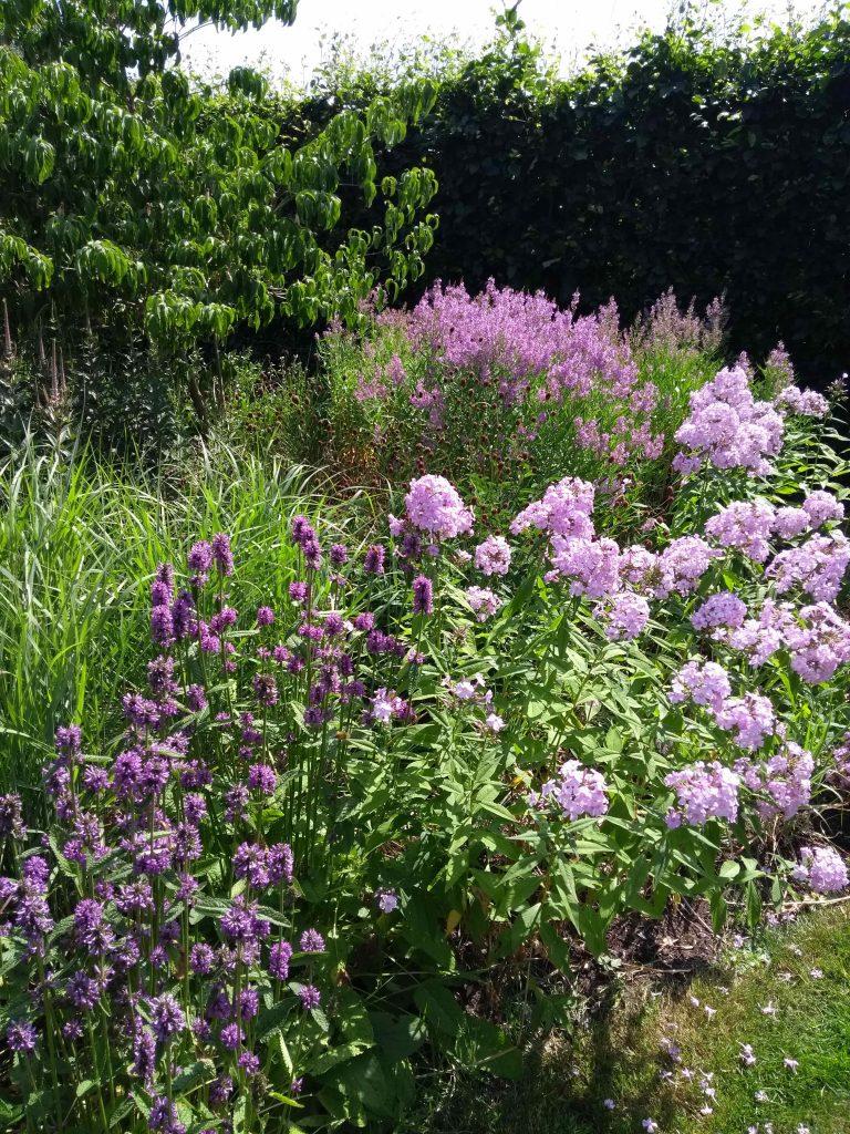Purple planting in Tom Stuart Smith's garden